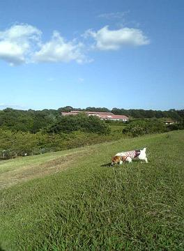 青空と芝生とアリー