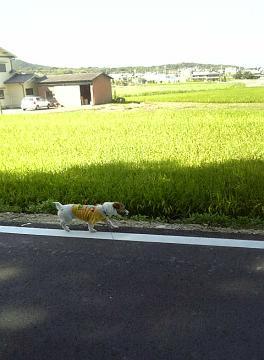 田園風景♪