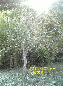 おばけっぽい柿の木