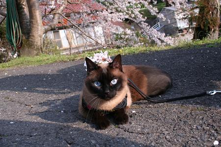 背中に桜が咲いてるね♪