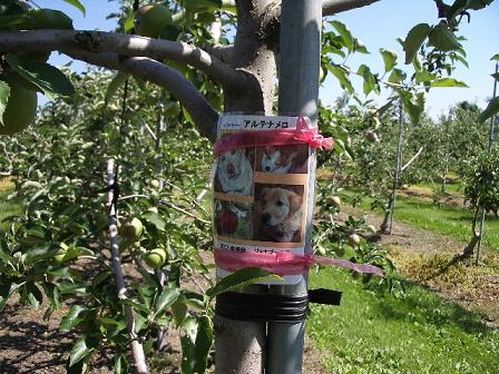 アルテナメロのりんごの木(名札)