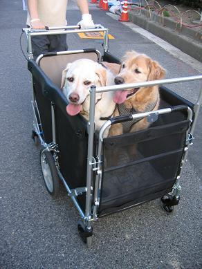 「お兄ちゃん、僕ら、何処に行くん?」