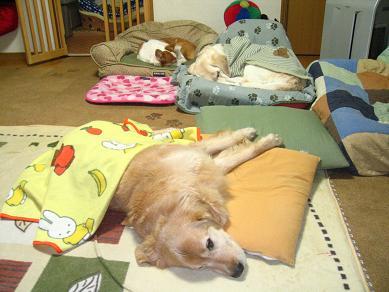 メロ、自分のソファーで寝てますよ~♪