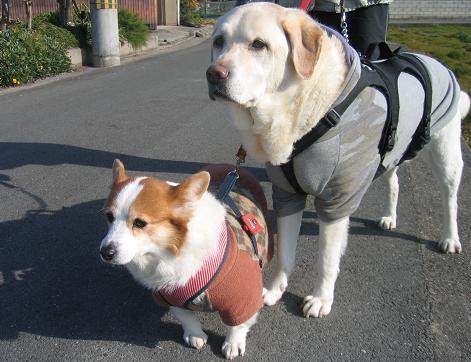 メロ「お兄ちゃんとの散歩、久し振りね。」