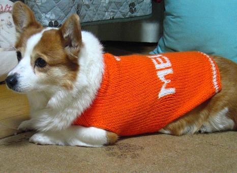 メロ、オレンジ色も似合うね^^