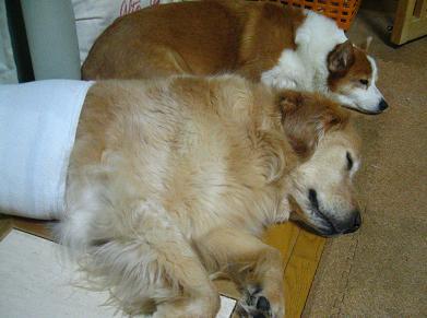 この2人(頭)が一緒に寝ているのは、とても珍しい~