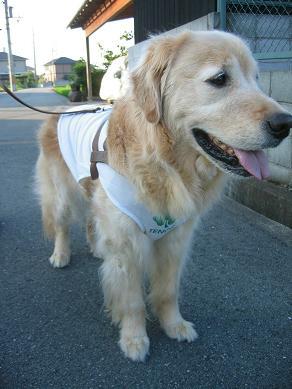 歩く距離は短くなったけど散歩大好き!!
