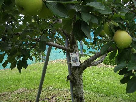 いつか、果樹園に行ってみたいなぁ~