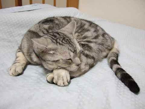 一見ごく普通の寝姿