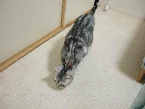 チェック猫1