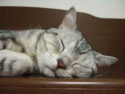 熟睡してます
