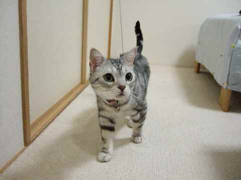 チェック猫2