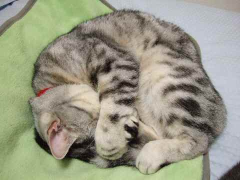 固まった猫