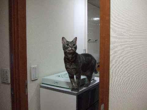 チェック猫3