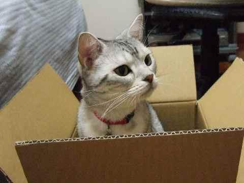 とりあえず箱が好き