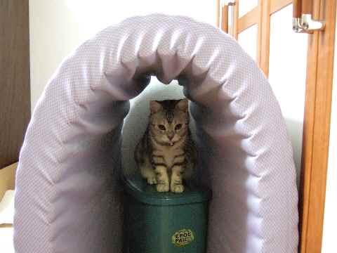チェック猫5