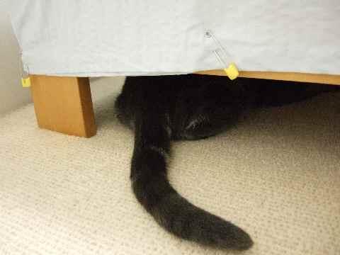 チェック猫8