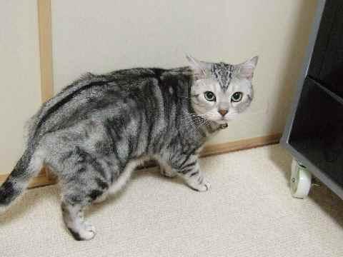 へっぴり腰偵察猫6
