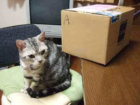 小さめの箱やな~