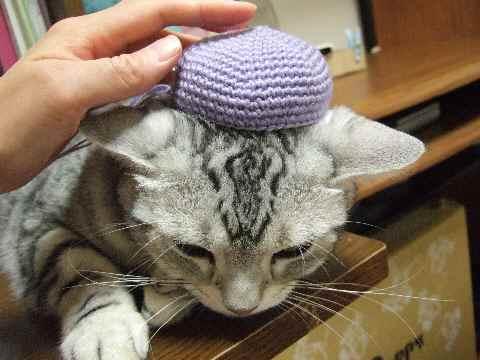 お帽子など、いかがでしょう?