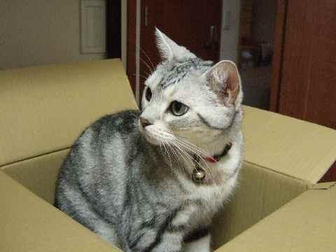 またもや捨て猫志願