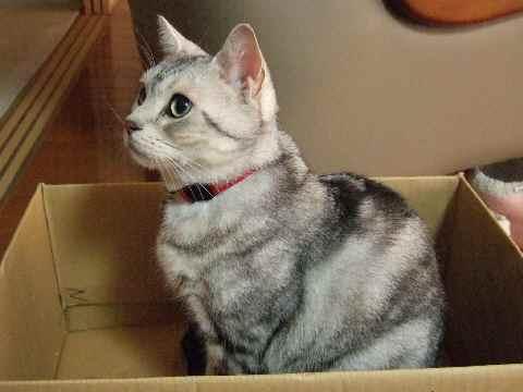 猫が来たりて箱入る
