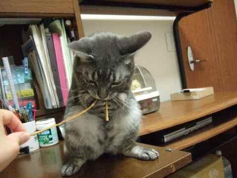 猫というよりハムスター?