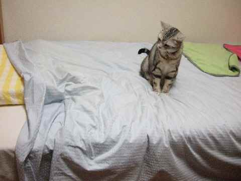 ぐちゃぐちゃベッド2