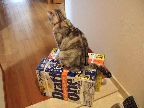 ビールじゃなくて……