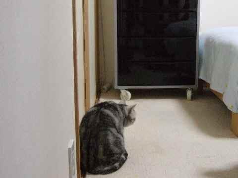へっぴり腰偵察猫1