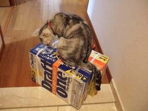 第3のビールやで