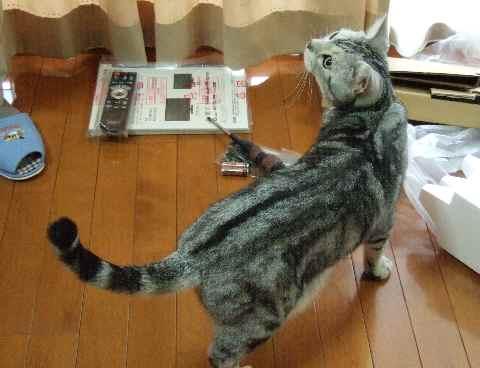 おっちゃん、何してるん?