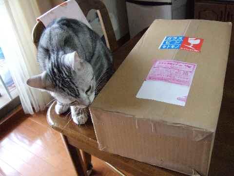 けっこうでっかい箱♪