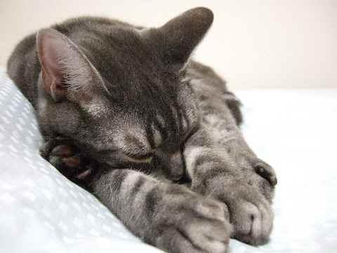 二つ折り猫3