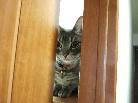 家政婦猫1