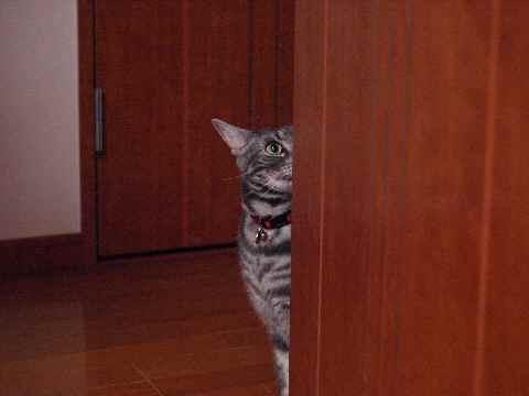 家政婦猫2