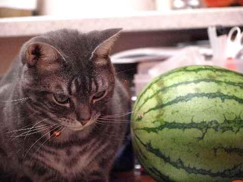 丸い猫・丸いスイカ