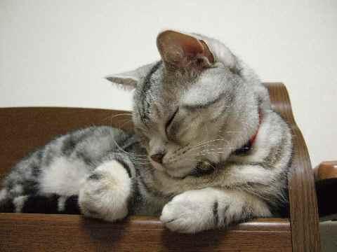 寝てるんです1