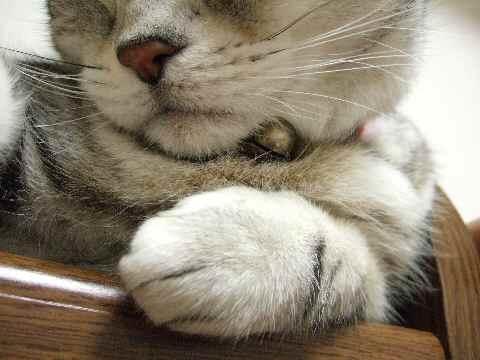 寝てるんです4