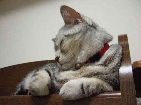 寝てるんです2