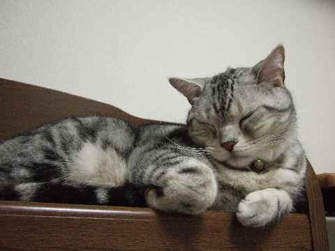 寝てるんです3