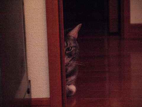 家政婦猫4