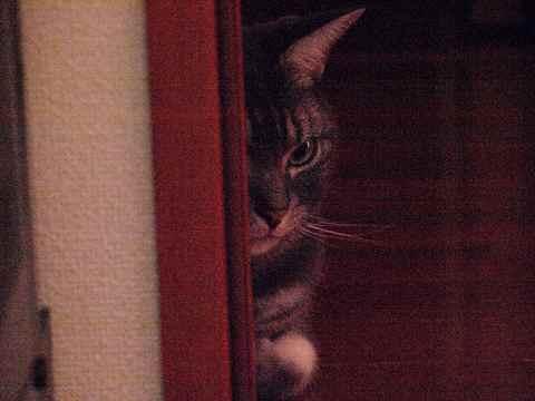 家政婦猫3