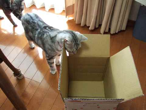 ええ箱やな~1