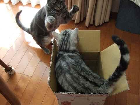 ええ箱やな~4