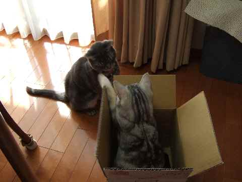 ええ箱やな~3