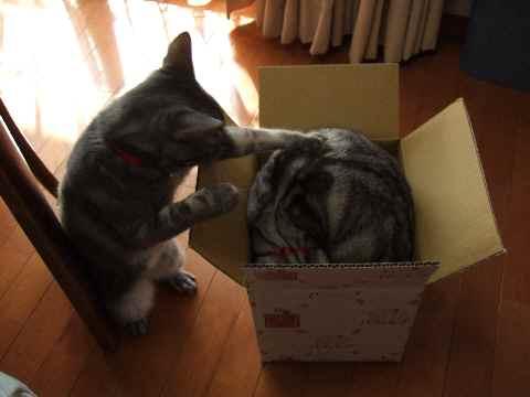 ええ箱やな~5