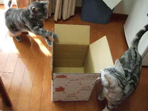 ええ箱やな~2