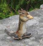 skateboard01.jpg