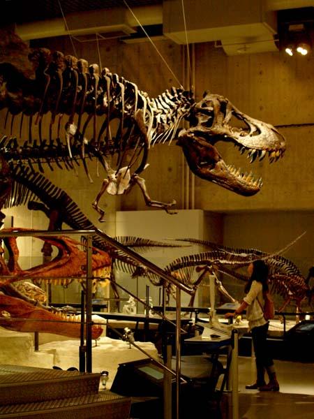 恐竜とお話